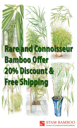 Stambamboo – Ireland's No 1 For Bamboo online – Your source